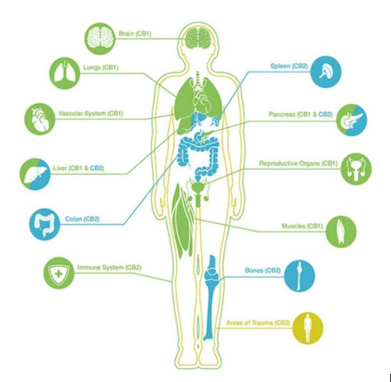 biological effects of cannabidiol