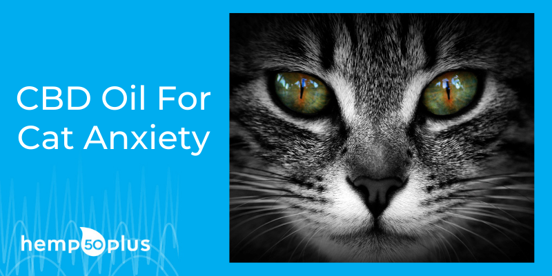 cbd for cat anxiety