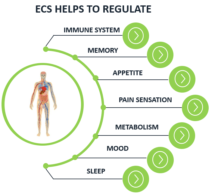 ecs helps with regulating